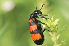 Insect op de installatie royalty-vrije stock fotografie