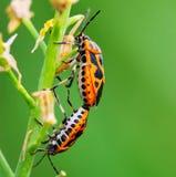 Insect op de installatie Royalty-vrije Stock Afbeeldingen