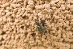 Insect op de muur Royalty-vrije Stock Fotografie