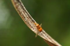 Insect op droog blad Stock Afbeeldingen