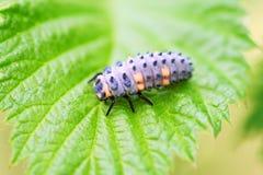 Insect op een blad stock foto