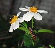 Insect op een bloem stock afbeeldingen