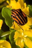 Insect op een bloem royalty-vrije stock afbeeldingen