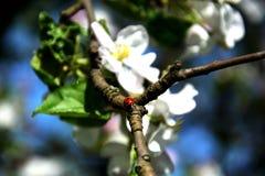 Insect op een bloem Royalty-vrije Stock Foto's
