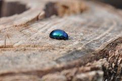 Insect op een boomstam stock foto's
