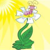 Insect op een gele achtergrond op een bloem Stock Foto's
