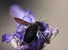 Insect op een purpere bloem stock foto's