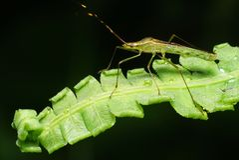 Insect op een varen royalty-vrije stock afbeelding