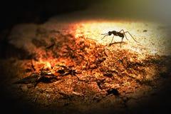 Insect op een zonnige dag stock afbeelding