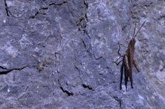 Insect op grijze rots Royalty-vrije Stock Foto