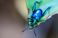 Insect op groen blad Royalty-vrije Stock Foto's