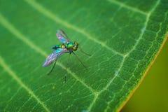 Insect op groen blad Stock Afbeelding