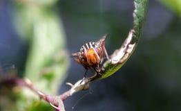Insect op het blad royalty-vrije stock foto's