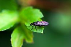 Insect op het blad royalty-vrije stock afbeeldingen