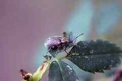 Insect op het blad stock fotografie