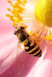 Insect op het werk Stock Fotografie