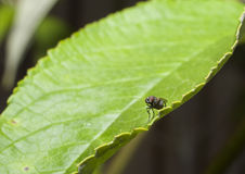 Insect op installatie stock afbeeldingen