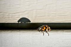 Insect op mijn huis Royalty-vrije Stock Afbeeldingen