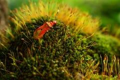 Insect op Mos Stock Afbeeldingen