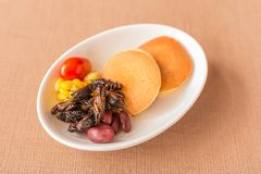 Insect pancake. Cricket insect, Corn, Red bean, Tomato with pancakes in a white bowl for breakfast. Close-up, Selective focus Stock Photo