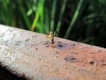 Insect on parapet Royalty Free Stock Images