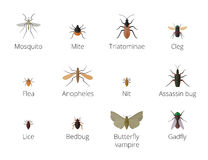 Insect parasites . Royalty Free Stock Image