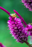 Insect. A insect is perched on a colorful flower Stock Photos