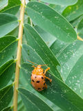 Insect perched on  leaf Royalty Free Stock Photo