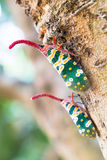 Insect perched on a tree trunk Stock Photo