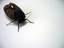 Insect - perspectiefmening stock afbeeldingen