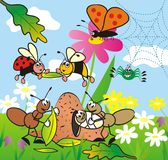 Insect stock illustration