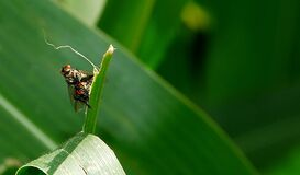Insect on plant Royalty Free Stock Photos