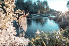 Insect on a plant stock images