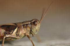 Insect portrait Stock Photos
