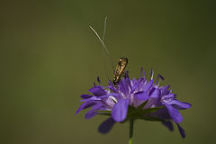 Insect on a purple flower Stock Image