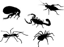 Insect x-ray collection Royalty Free Stock Image