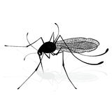 Insect a realistic gnat mosquito. Mosquito silhouette. Mosquito  on white background. Vector sketch illustration Royalty Free Stock Images