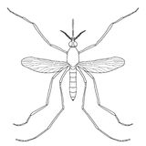 Insect. a realistic mosquito. Culex pipiens Royalty Free Stock Photo
