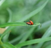 Insect Reproduction Royalty Free Stock Photos