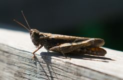 An insect resting on a piece of wood royalty free stock photo