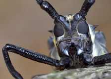 Insect's face Stock Photos
