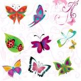 Insect set. Design elements. Butterflies, ladybird, dragonfly etc Stock Photos
