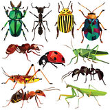 Insect set Stock Images