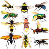 Insect set Stock Photos