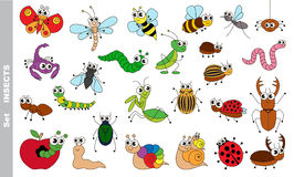 Insect set colorful. Royalty Free Stock Image
