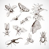 Insect Set, hand Drawn. Vintage illustrations with butterflies Royalty Free Stock Photos