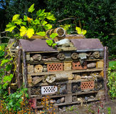Insect Shelter Royalty Free Stock Photos