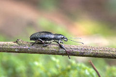 Insect sighted in the Atlantic Forest Stock Photo