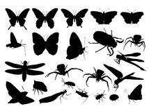Insect silhouette Royalty Free Stock Photo