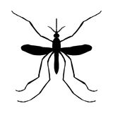 Insect silhouette. Insect. a realistic mosquito. Culex pipiens Mosquito silhouette. Mosquito  on white Stock Images